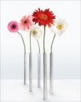 Magische Vase. 5er Set