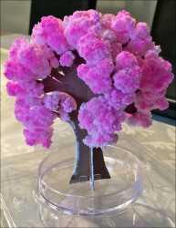 Magische Kirschblüte. Miniatur-Baum.