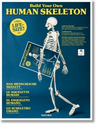 Das menschliche Skelett. Karton-Bausatz.