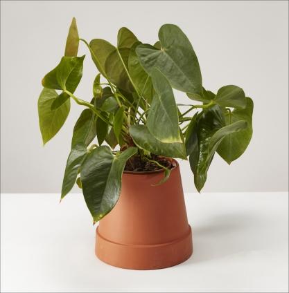 Boskke Flipped Planter.