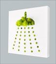 Pflanzen-Piktogramm. Motiv Dusche/Bad. Natürliches Islandmoos