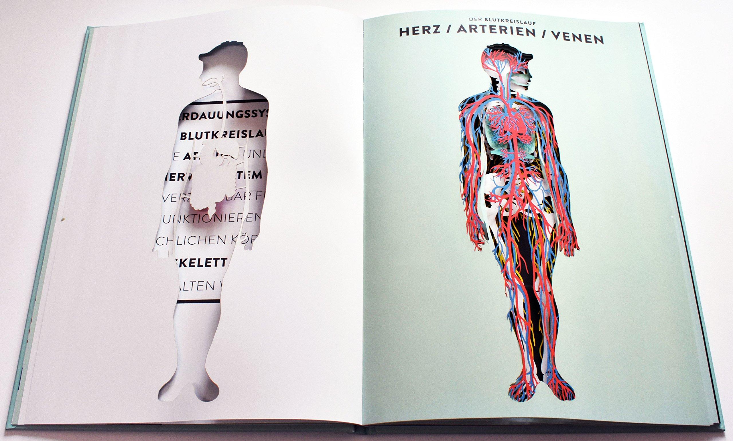 Atemberaubend Anatomie Der Wunder Ideen - Menschliche Anatomie ...