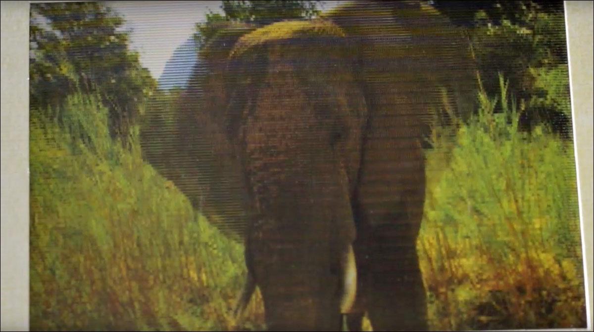 Bild der wissenschaft shop safari eine atemberaubende for Atemberaubende gartenideen