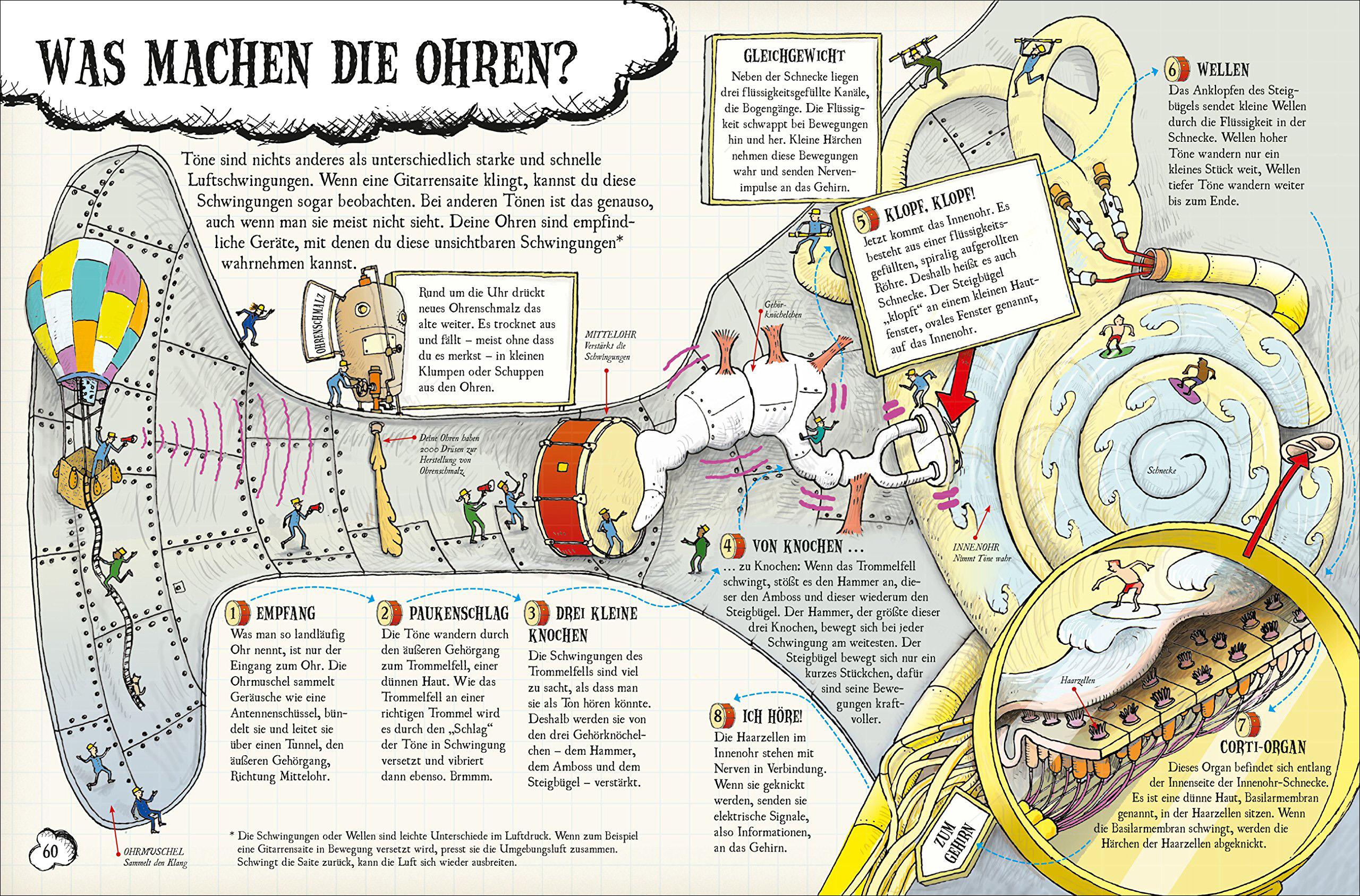 Groß Körper Funktioniert Anatomie Ideen - Menschliche Anatomie ...