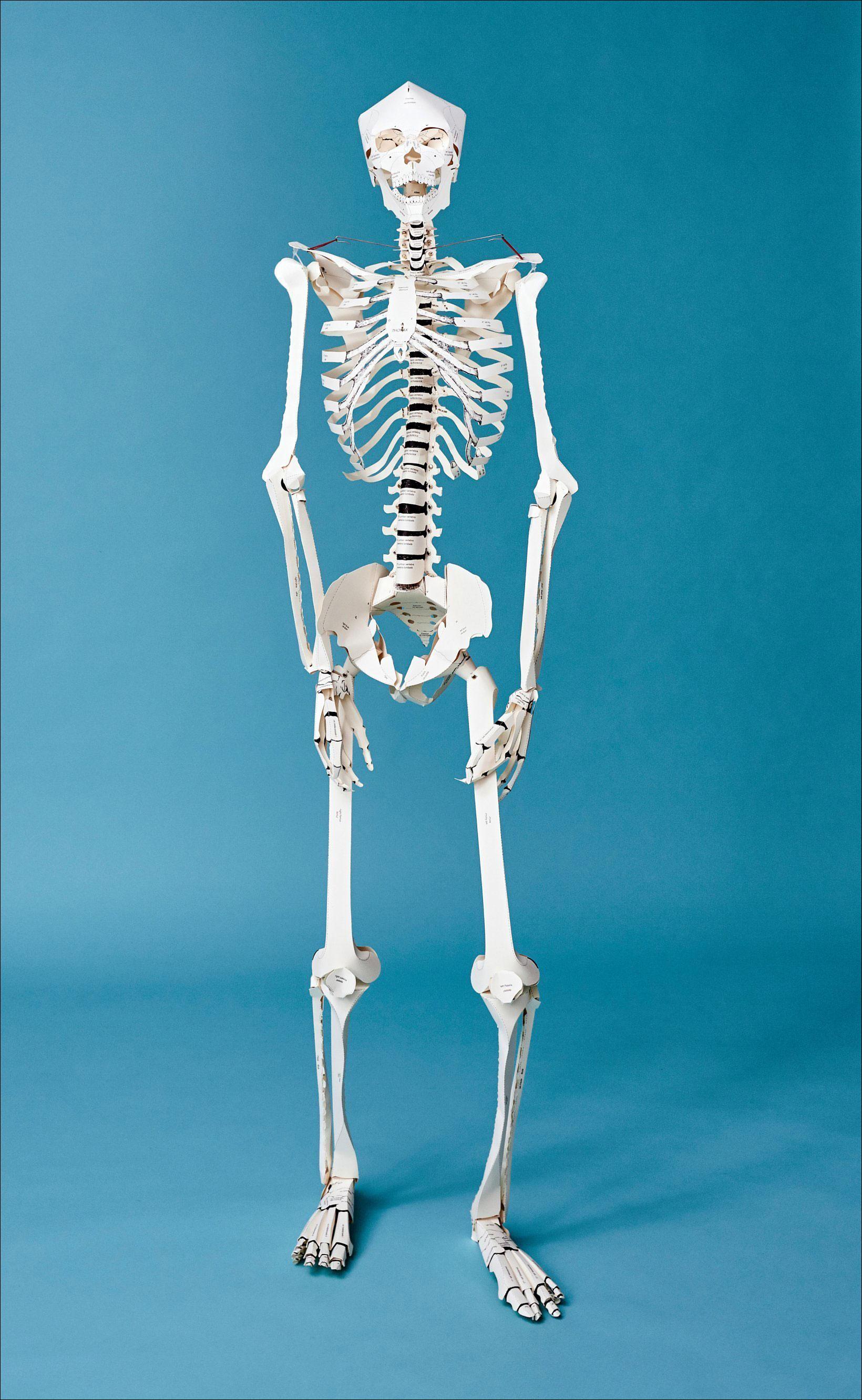 Bild Der Wissenschaft Shop Build Your Own Human Skeleton Life