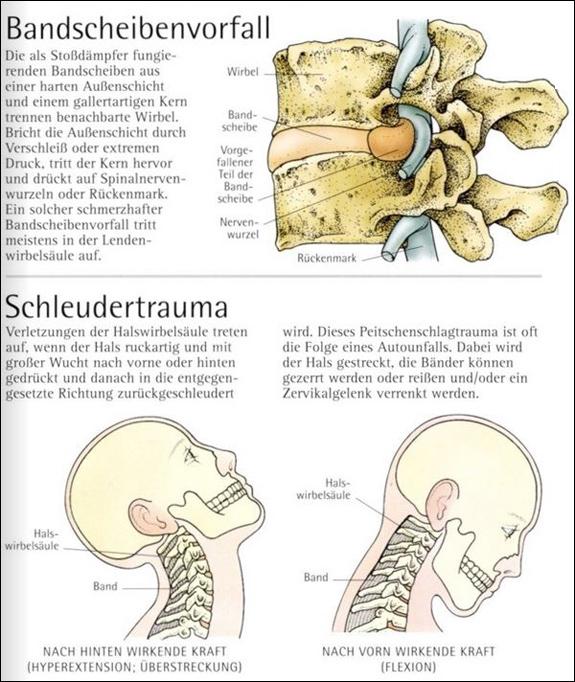 Berühmt Maus Rückenmark Anatomie Bilder - Anatomie Von Menschlichen ...