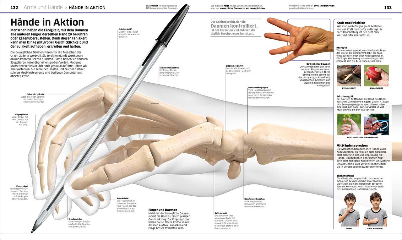 Nett Daumen Der Rechten Hand Anatomie Galerie - Anatomie Ideen ...