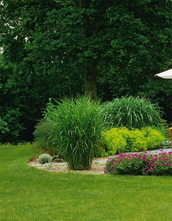 vorgarten gestalten mit grasern – msglocal, Terrassen ideen