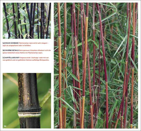 gr ser und bambus im garten pictures to pin on pinterest. Black Bedroom Furniture Sets. Home Design Ideas