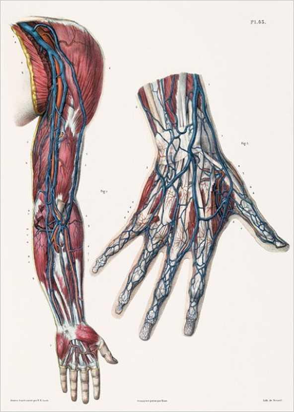 bild der wissenschaft Shop | Atlas der menschlichen Anatomie und ...