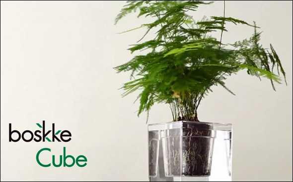 wissenschaftliche geschenkideen boskke pflanzen kubus klein. Black Bedroom Furniture Sets. Home Design Ideas