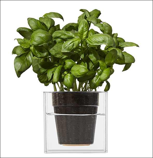wissenschaftliche geschenkideen boskke pflanzen kubus gro. Black Bedroom Furniture Sets. Home Design Ideas