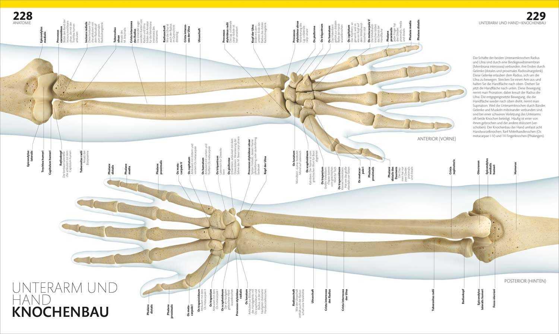 Berühmt Anatomie Knochenbau Zeitgenössisch - Menschliche Anatomie ...