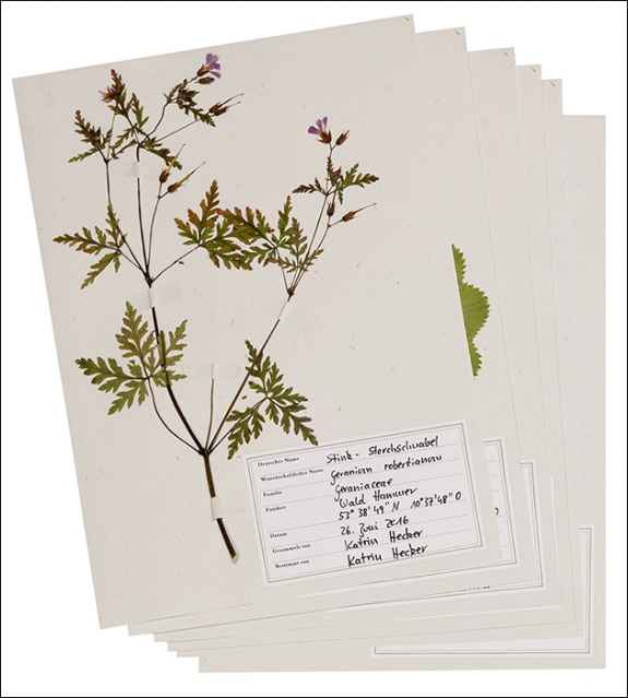 bild der wissenschaft shop was bl ht denn da das herbarium erlesenes wissen scheibchenweise. Black Bedroom Furniture Sets. Home Design Ideas